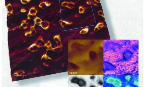 Prior Scientific's Tom Freda talks to Microscopy & Analysis